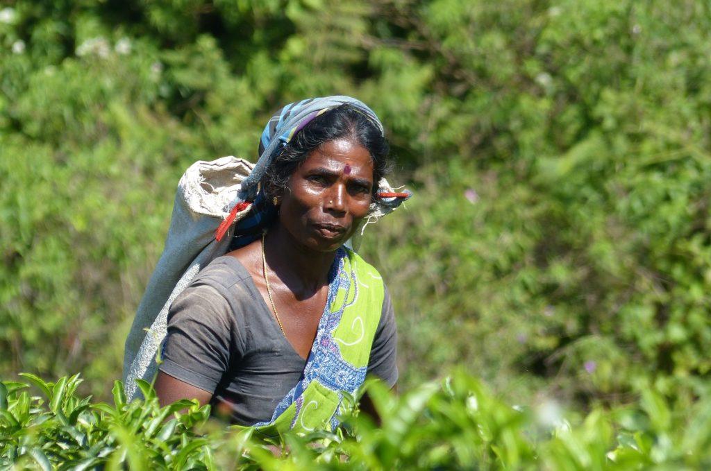 страны производящие чай